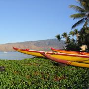 Maui paradiso